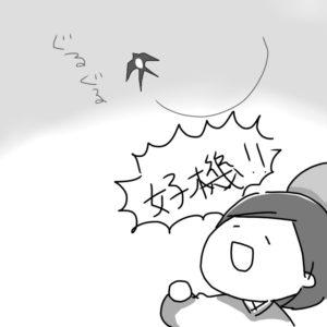 の 子安 貝 燕